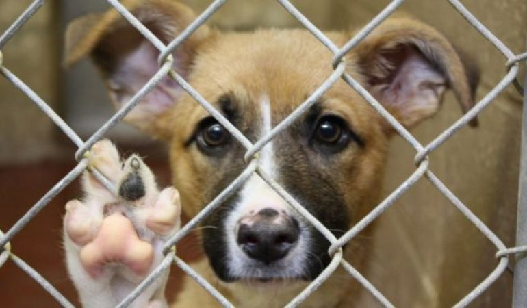 Targ de adoptii sambata, la Adapostul canin Breasta